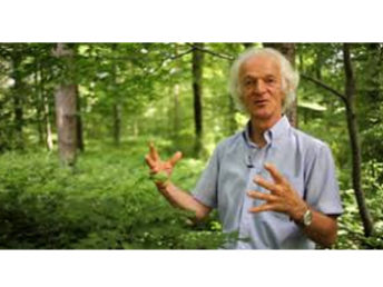 TOUT est dans TOUT : une autre approche de la forêt avec Ernst ZÜRCHER