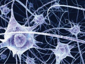 Tissu conjonctif – Fascia : «notre allié»